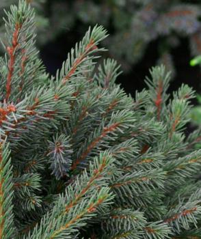 kleiner weihnachtsbaum weihnachtsgeschichten cd kinderweihnachtsbaum im metalleimer. Black Bedroom Furniture Sets. Home Design Ideas