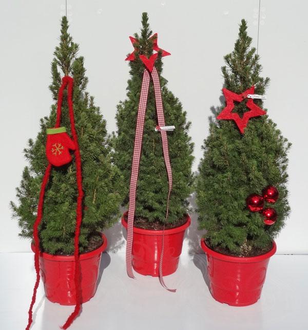 kleiner weihnachtsbaum f r kleine wohnung die wei fichte. Black Bedroom Furniture Sets. Home Design Ideas
