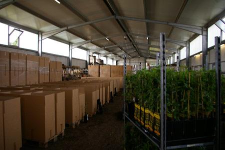 Sichere Verpackung beim Versand von Pflanzen - Versand