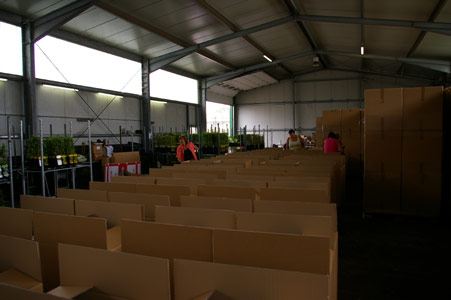 Sichere Verpackung beim Versand von Pflanzen - fertig Verpacken