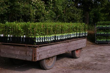 Sichere Verpackung beim Versand von Pflanzen - Transportieren
