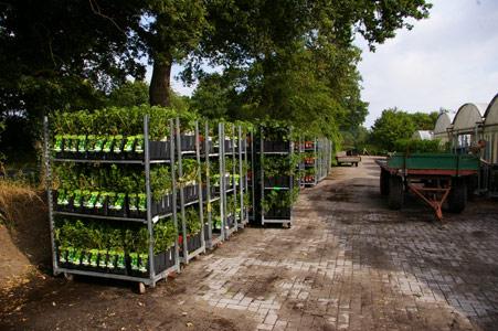 Sichere Verpackung beim Versand von Pflanzen - Bereitsstellen der Pflanzen